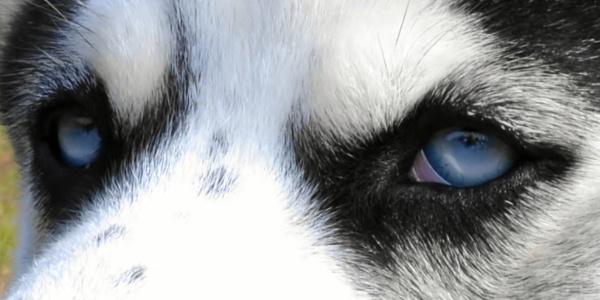 It\'s all in the eyes by kmfletch