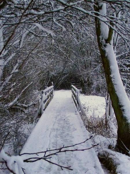 Along the snowy boardwalk by fastshoot