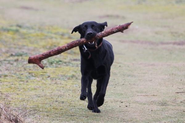 I love sticks! by Gavin319