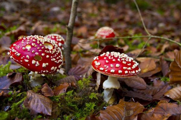 Fungus in Autumn by PieterDePauw