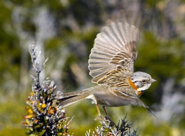 Flying Away by PieterDePauw