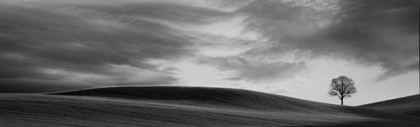 Shadowlands by lfc1892