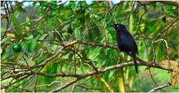 A Foreign Bird