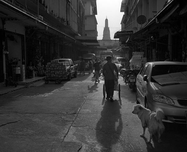 Siam by MDaniel