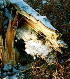 Split trunk