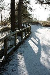 A walk in the Lickeys