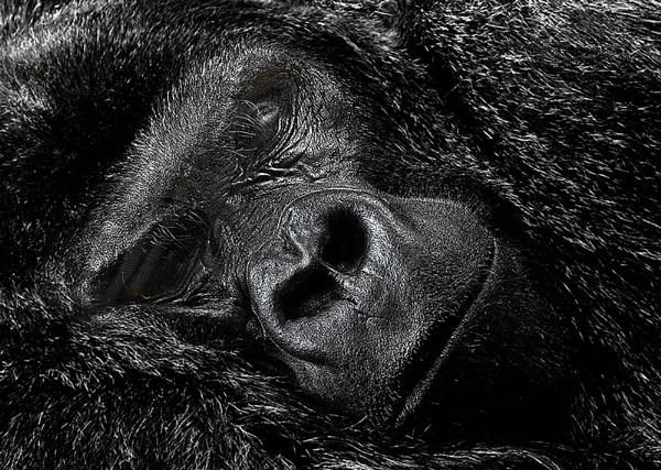 Sleeping by gary_d