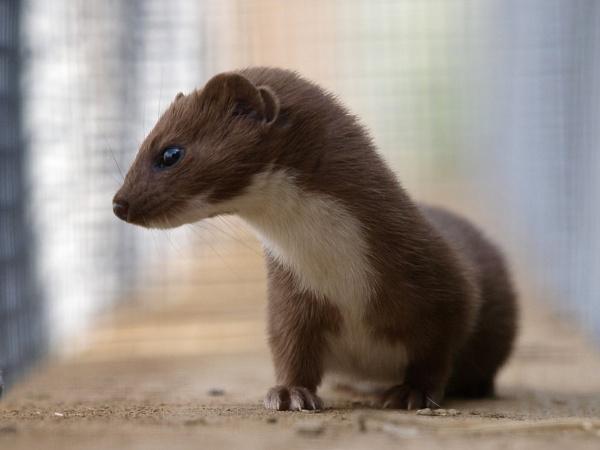 My Favorite Critter by Graham_Rainham