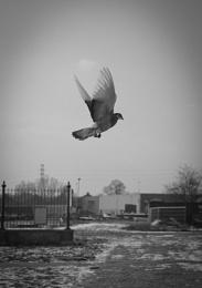 Go Birdie, Go!