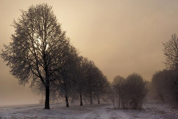 Winter by grt