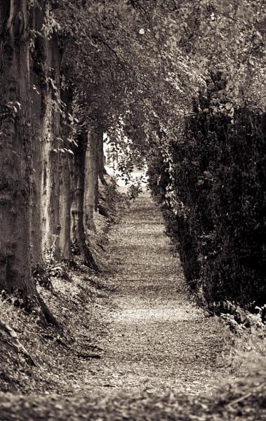 Sadley by HuntedDragon