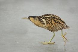 Sharp Ice Skates or Toad Killing Feet