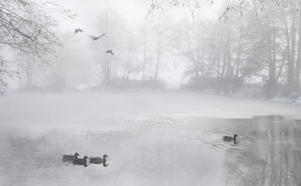 Ducks in the Mist by KatyJ