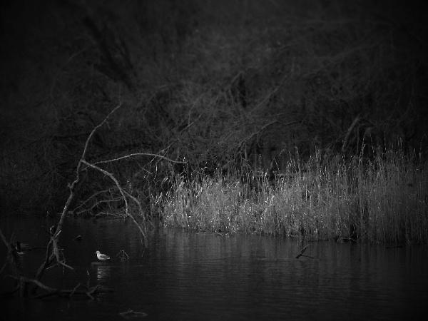 Black Series Part 1 by nellabella