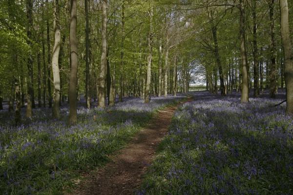 Dockey Woods by f8