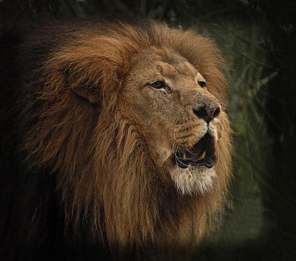 A Very Loud Roar! by CaroleS