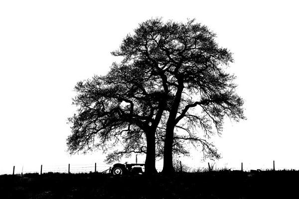 Tractor under tree.. silhouette. by Steve2rhino