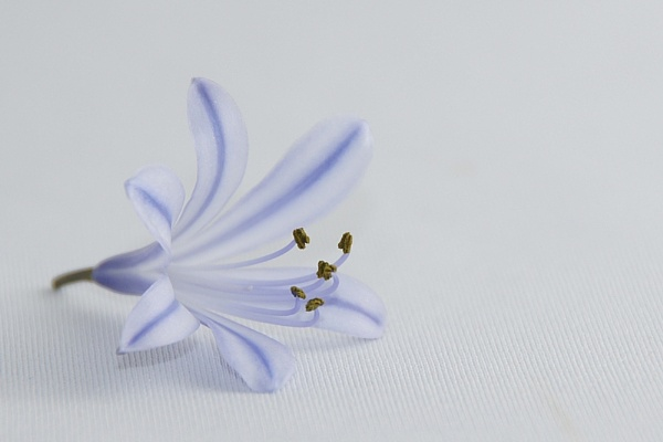 Blue Flower by janeil
