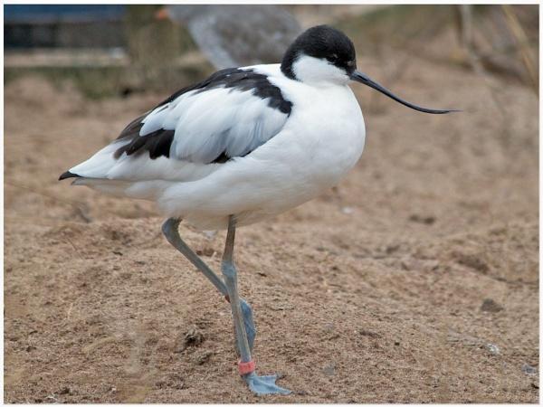 Somebody bent my beak! by marktc