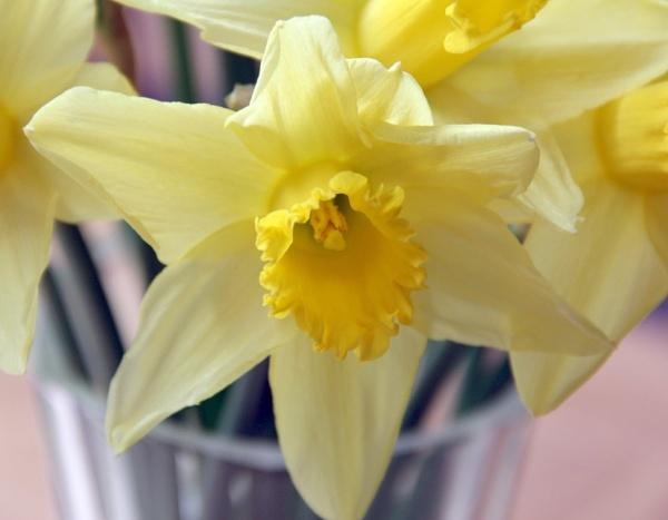 Spring is coming..... by JadeClark