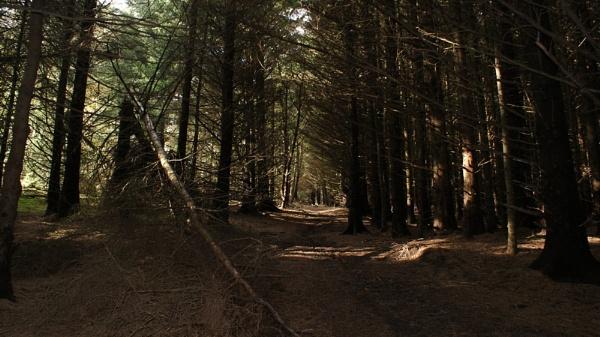 Sun & Trees by alanbbad