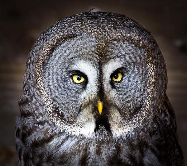 Owl by thatmanbrian