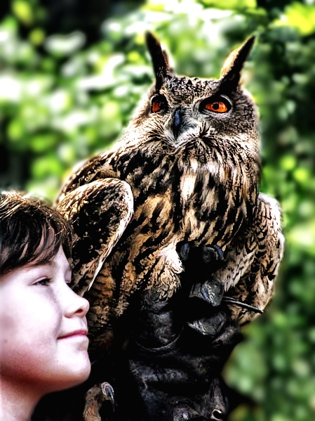 owl, child and falconer by madshutter