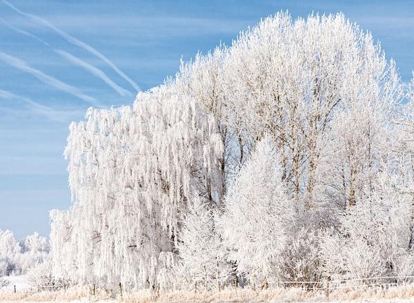 Winter tree by HBJ