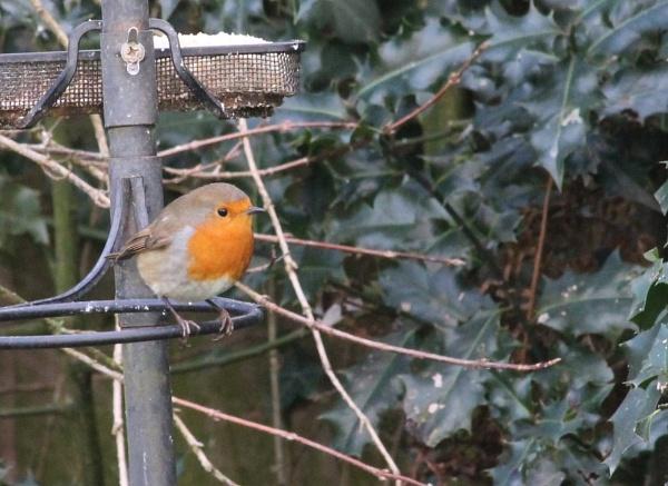 Nice round robin by Gavin319