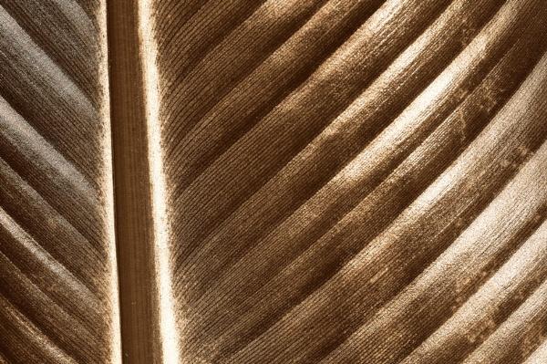 Cinnabar Leaf II (Sepia) by LexEquine