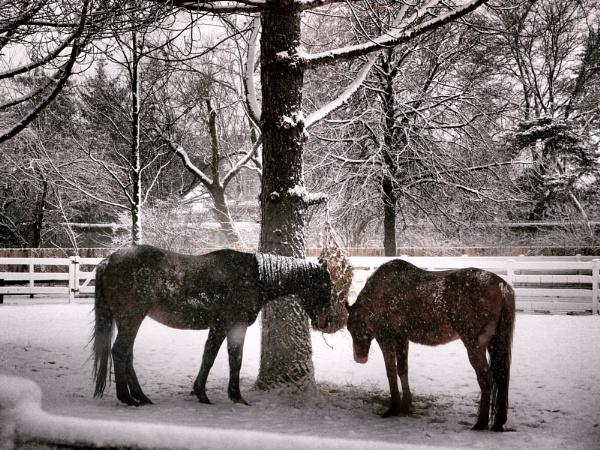 Horses by esperanza