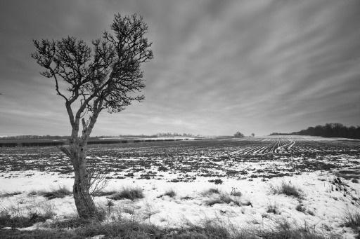 Tree by Moey
