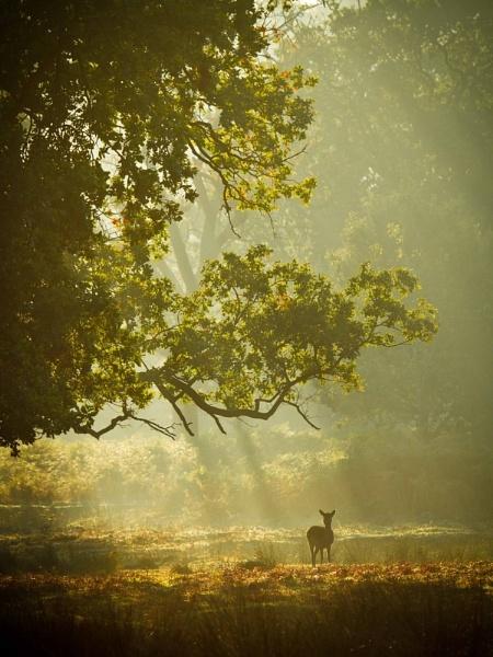 Deer in mist by carbonbianchi
