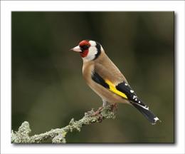 A Bird on a Stick.