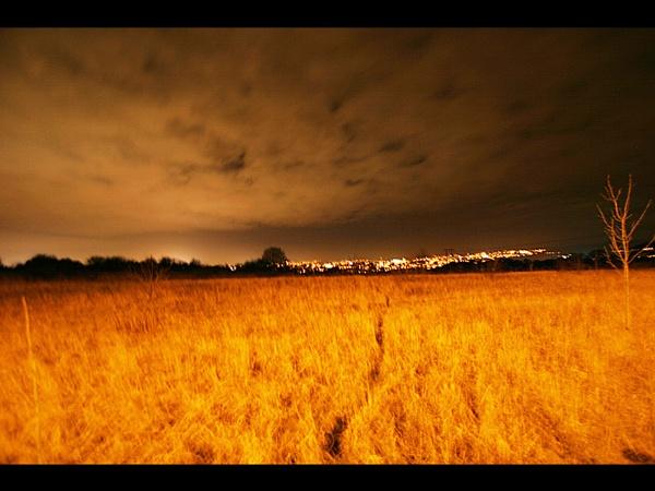 Field of Gold by Robert_Jones