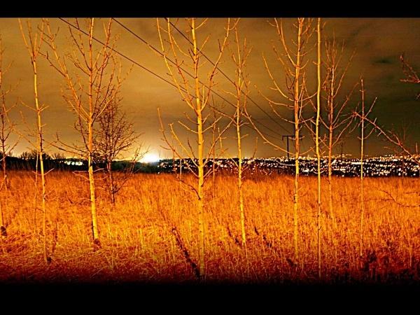 Winter Trees by Robert_Jones