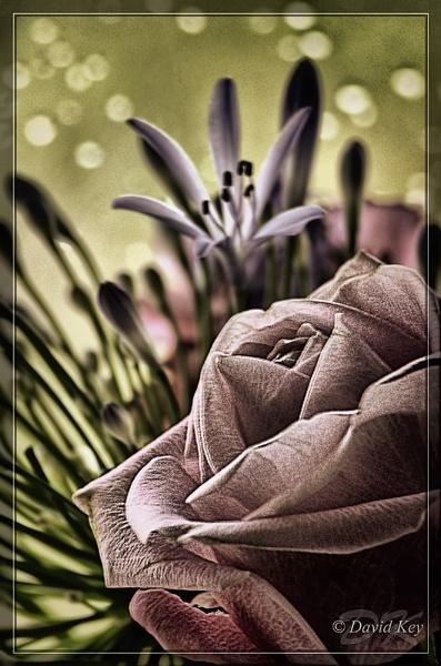 Valentines Rose by woodyp