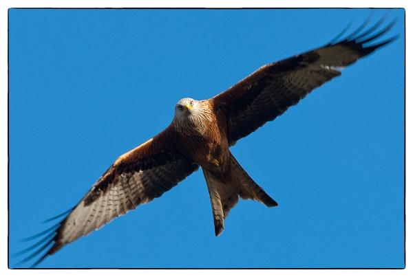 Kite by john short