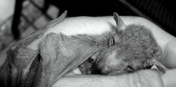 hush hush little Sammy... by meniko