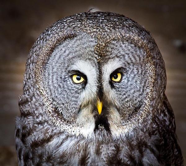 Round Owl by thatmanbrian