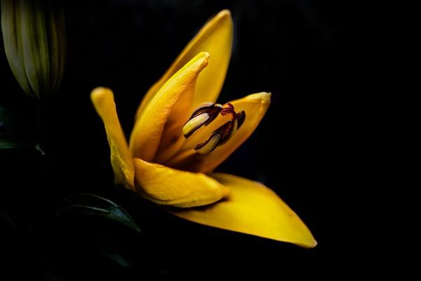 Yellow No. 1 by enricopardo