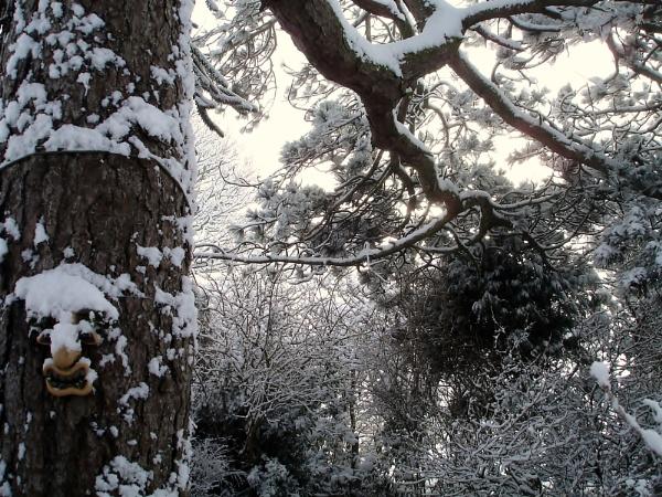 My garden by Pengarnedd