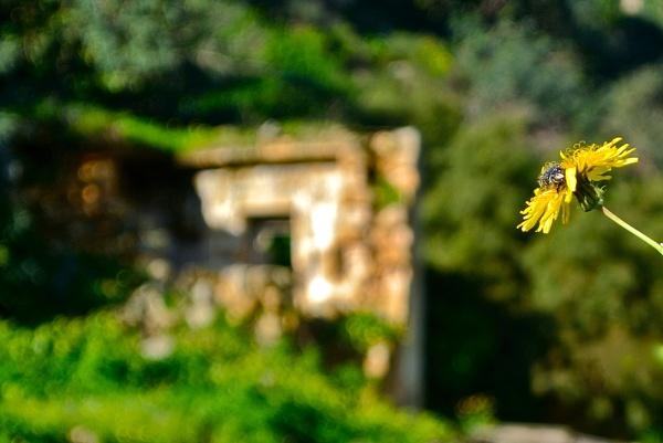Flowery Business by wenzu78