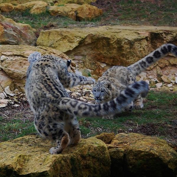 Cat fight by jka59