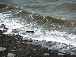 Seal in Angel Bay