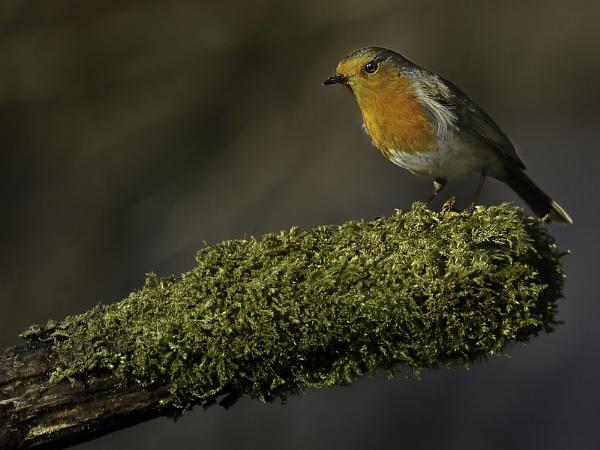 Bird on a Stick by K_T