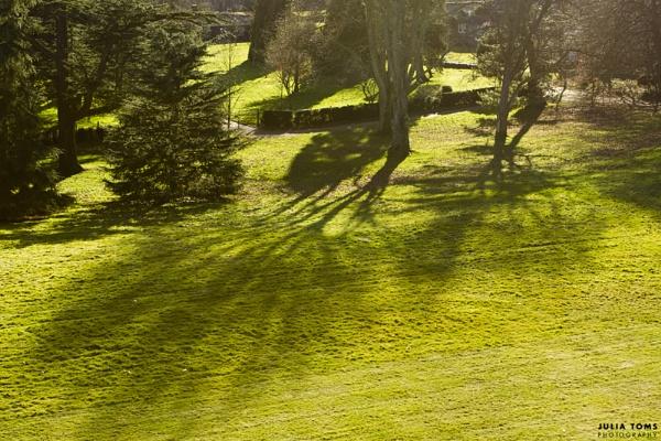 023/365 Spring Greens by julzt