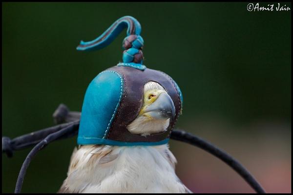 Masked Bird by aj14