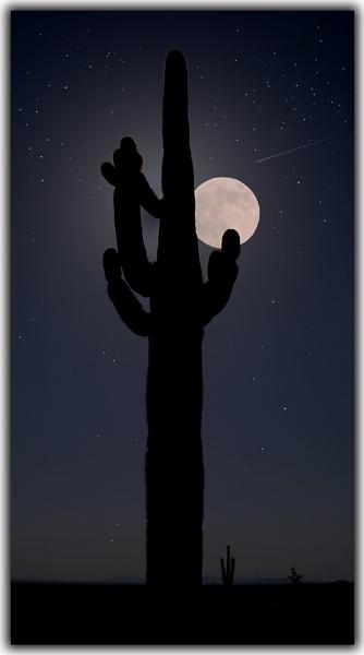 Desert Moon by cjentlie