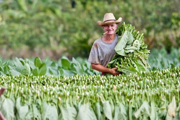 farmer cuba by jclaydon1